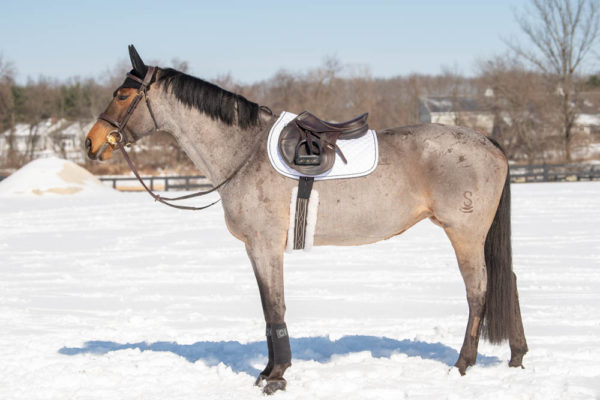 Global Recycled Standard horse tack