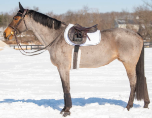Equestrian tack made of sustainably-sourced and recycled materials for minimal environmental impact.
